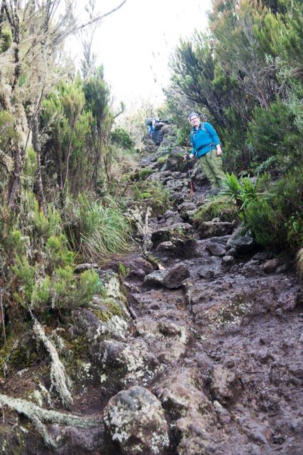 Day 2 Kilimanjaro Trek Steep Climb