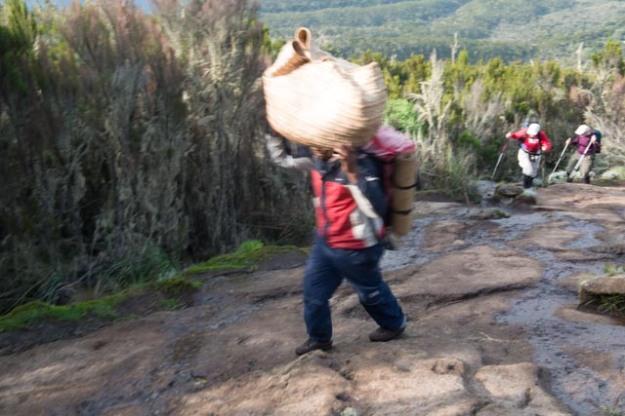 A Kilimanjaro Porter Carrying Up His Load