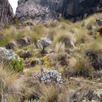 Cool Vegetation on Kilimanjaro