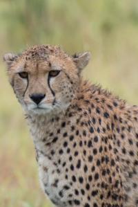 Cheetah-Alyssa O'Mara
