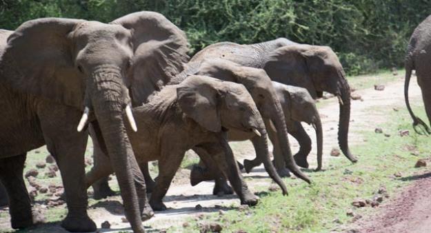 Elephants-Alyssa O'Mara